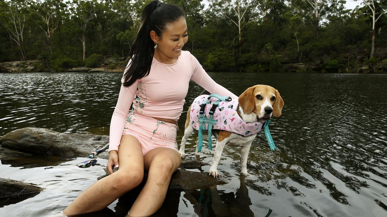 Canine water safety issues inspire dog life jacket invention